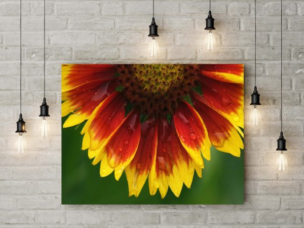 Amazing Sunflower 1