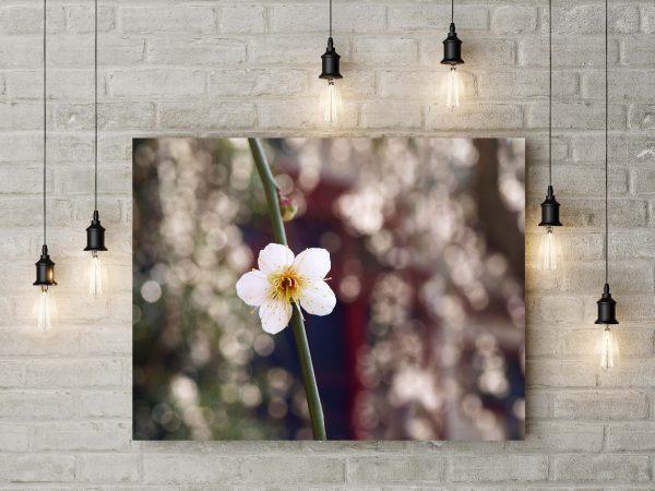 Amazing White Flower 1