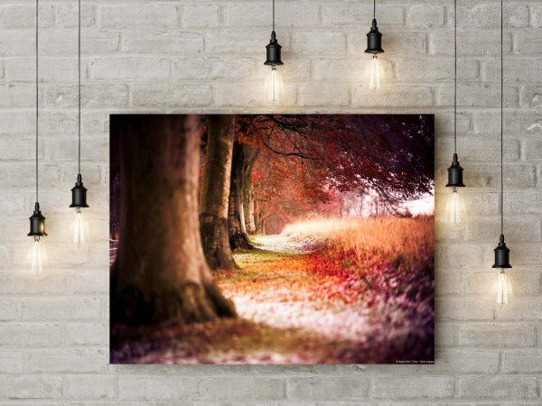 Autumn Alley 1