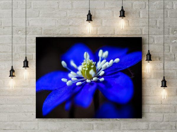 Beautiful Blue Flower 1