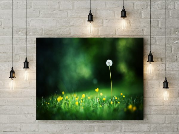 Beautiful Dandelion In Grass 1