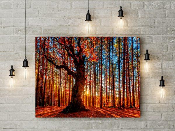 Beautiful Sunset Forest 1