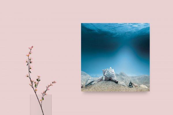 Beautiful Underwater Shells 1