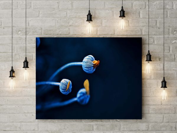 Blue Buds Flowers 1