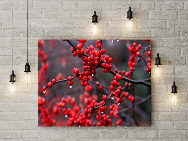 Branch Of Red Berries 1
