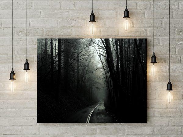 Dark Forest Monochrome Photo 1