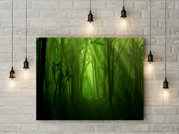 Dark Green Forest 1