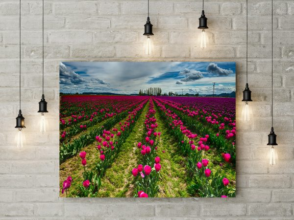 Field With Pink Tulips 1