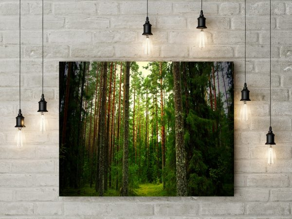 Forest Wonder 1