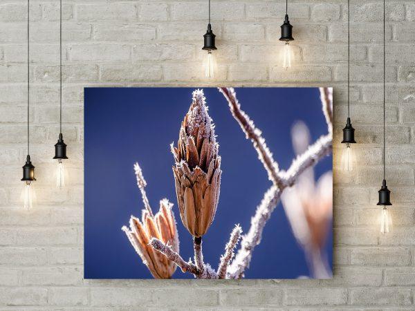 Frozen Branch 1