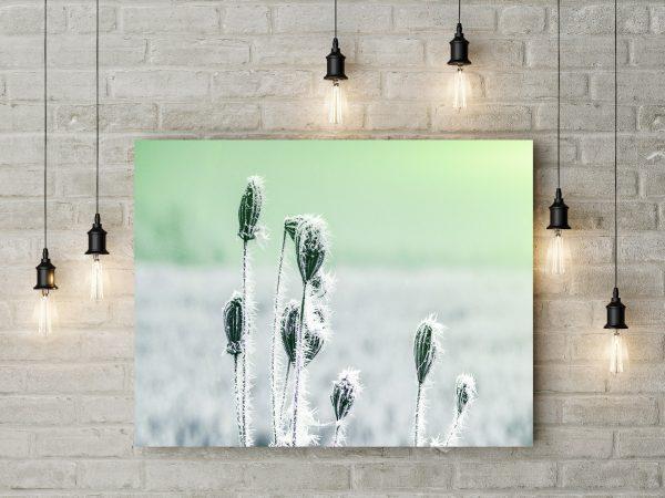 Frozen Plants 1