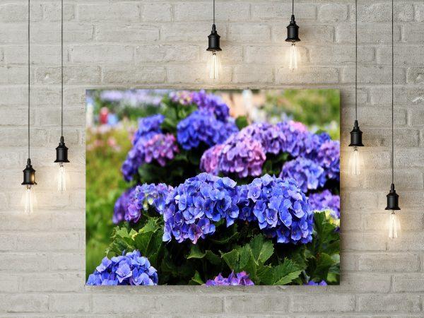 Hydrangea Flowers Blooms 1