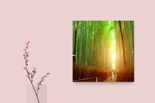 Kyoto Arashiyama Bamboo Forest Japan 1