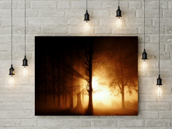 Lights In Foggy Forest 1