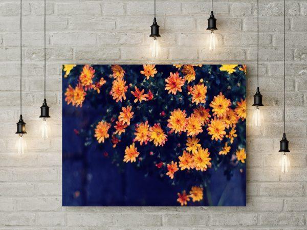 Orange Straw Flower 1