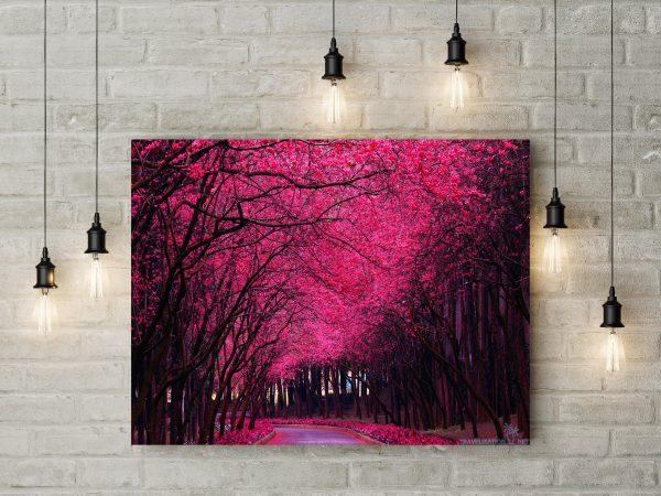 Pink Flowering Trees 1