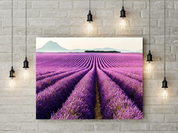 Provence France, Purple Lavender Field 1
