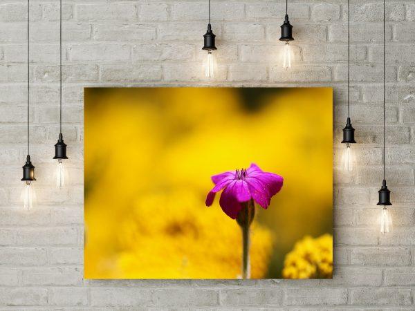 Purple Flower In Yellow World 1