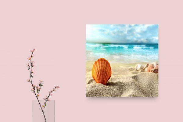 Shell In Beach 1