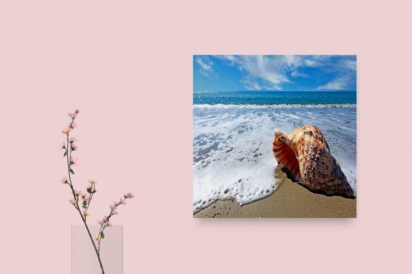 Shell On Sea Waves 1