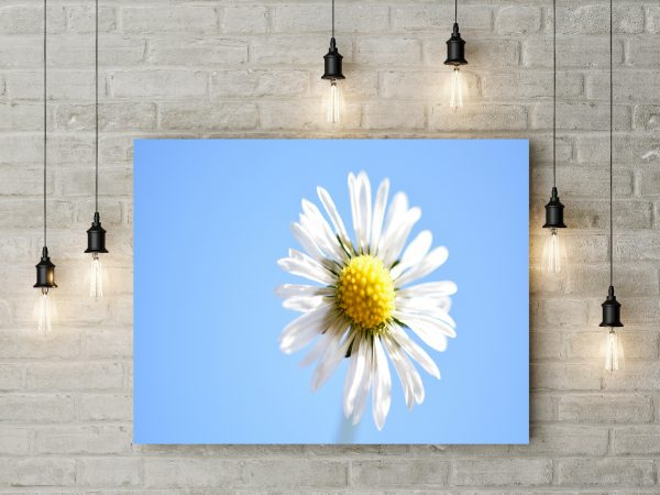 Simple And Beautiful Flower 1