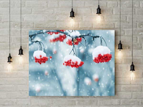 Snowing On Red Berries 1