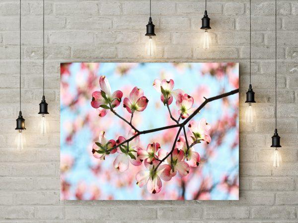 Spring Pink Petals 1