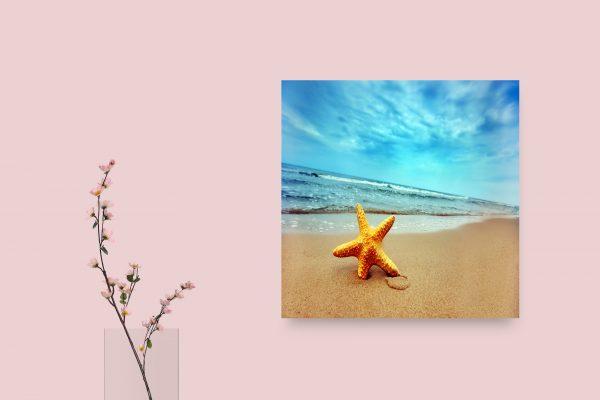 Starfish In Beach 1