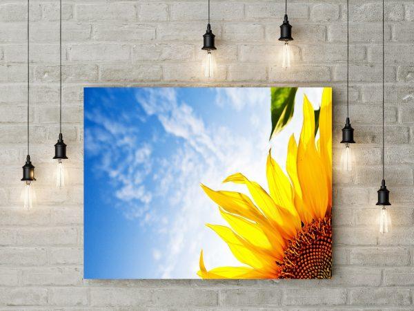Sunflower And Blue Sky 1
