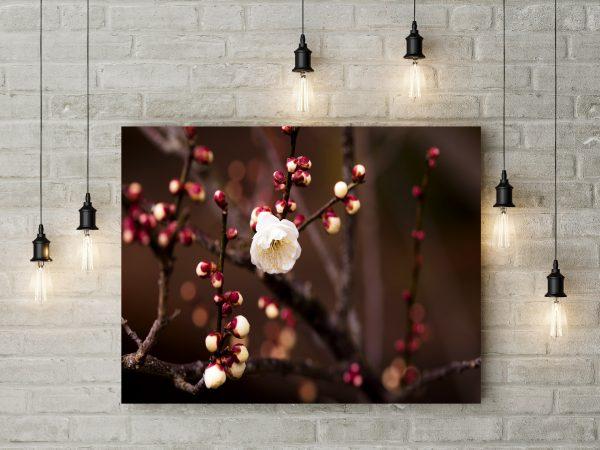 White Cherry Flower 1