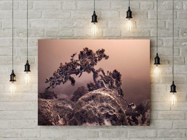 Winter Tree In Rock 1