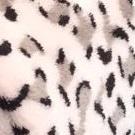 C.F. White Leopard